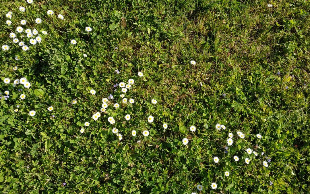 Pieds nus dans l'herbe